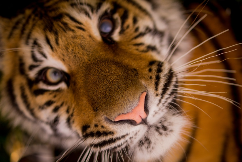animal-close-up-view-africa-wilderness