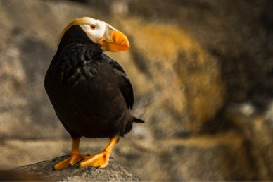 animal-arctic-avian-688895